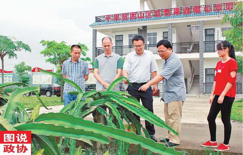 平果县政协组织调研组就特色农业产业发展情况进行调研